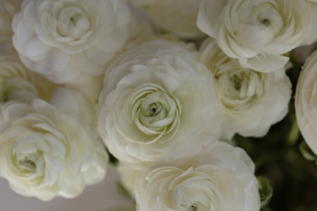 Close up of bouquet of white ranunculus flower stock photo picture close up of bouquet of white ranunculus flower stock photo 75376169 mightylinksfo