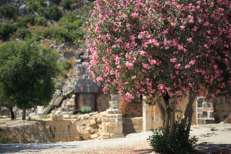 horisontal: Horisontal shot of blooming rododendron tree in sharp focus and ancient necropolis blurred in ancient and archeological site of Lycian Myra in Turkey Stock Photo