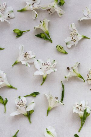 Floral banner with white flowers over gray background.
