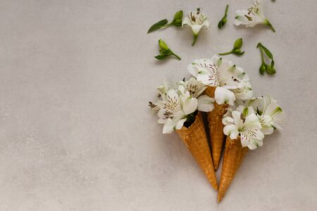 Summer or sping concept. Flowers in the ice-cream cones. 版權商用圖片