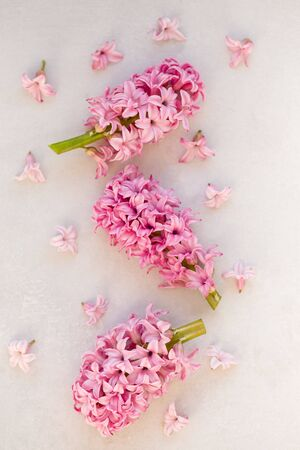 Vertical floral banner with pink hyacinthus.