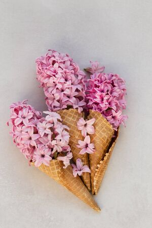 Summer or spring concept. Ice-cream cone with pink hyacinthus. 版權商用圖片