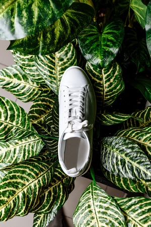 stylish white sneaker with a star ornament made of rhinestones on the backdrop against the motley leaves of the plant