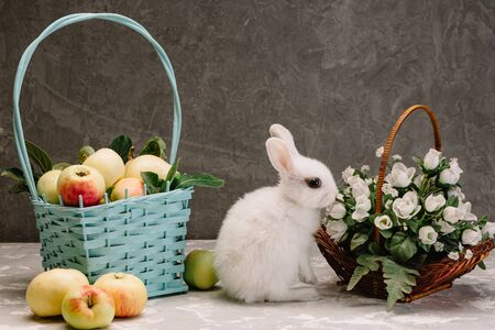 white little rabbit with black eyes next to a basket of apples and a basket of flowers on a gray background