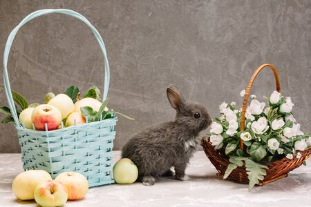 gray little rabbit next to a basket of apples and a basket with white flowers on a gray background