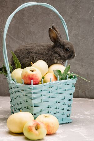 gray little rabbit sitting on a basket with apples next to a basket with white flowers on a gray background 免版税图像