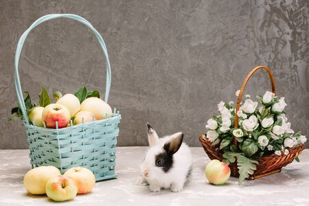 white little rabbit with black spots sits near a basket of apples and a basket with white flowers on a gray background
