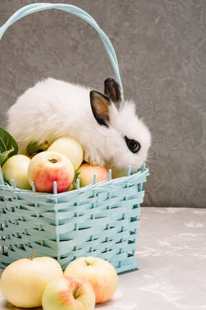 white little rabbit with black eyes and ears next to a basket of apples and a basket of white flowers