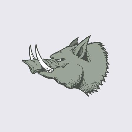 Angry of head wild hog mascot. cartoon character Illustration