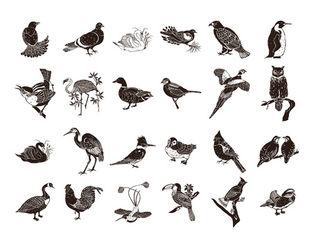 Birds collection clipart Illustration.