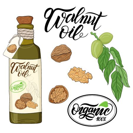 bottle of walnut oil and flax flower elements Illustration