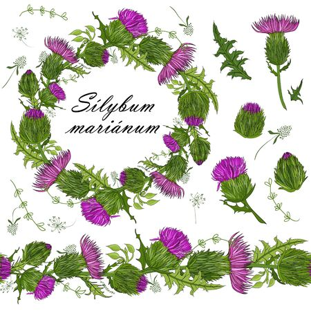 floral set of seamless floral brushes from milk thistle flowers and a beautiful wreath