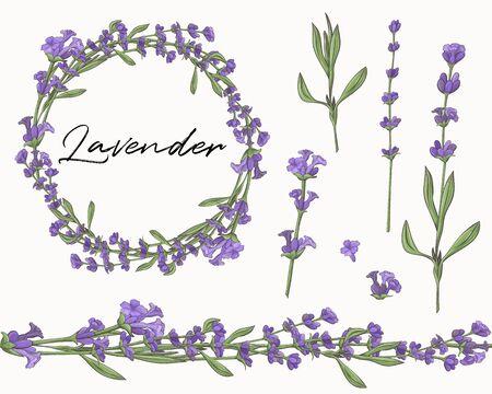 Set of lavender flower elements. Seamless brush. Flower wreath.