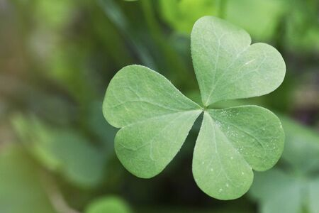 paddys: Shamrock detail with blurred green background Stock Photo