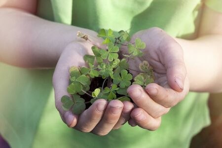 st  paddy's day: Shamrock plant cupped in childs hands