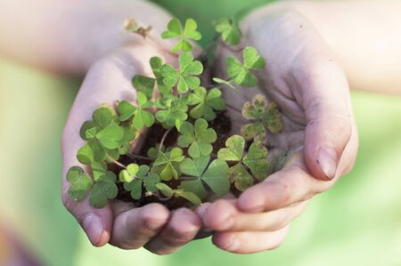 paddys day: Shamrock cupped in childs hands
