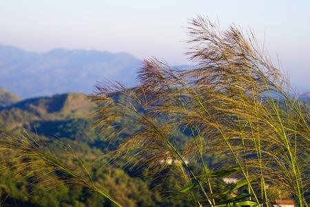 grass on the mountain gets sunshine. Фото со стока