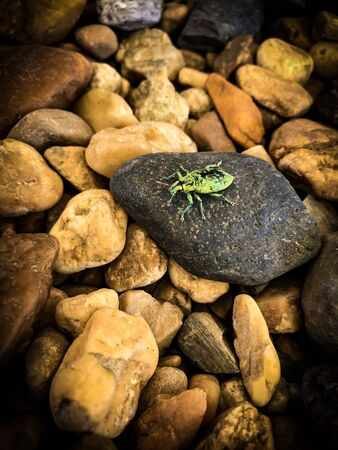 Small green insect on the stone.