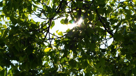 trickling: Sunlight trickling through the leaves
