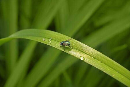 hexapod: Fly on the green plant Stock Photo