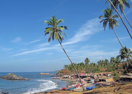 Goa beach landscape with blue sky and palms