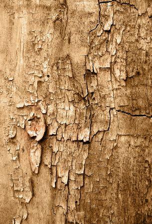 Grunge texture of cracked wood photo