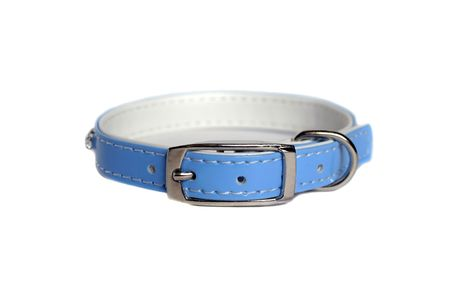 metal fastener: leather animal collar isolated on white