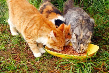 Three cats having a breakfast photo