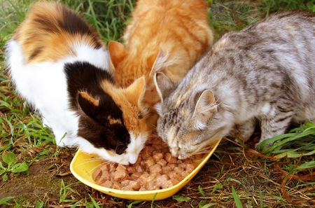 Three cats having a breakfast Stock Photo - 6785495