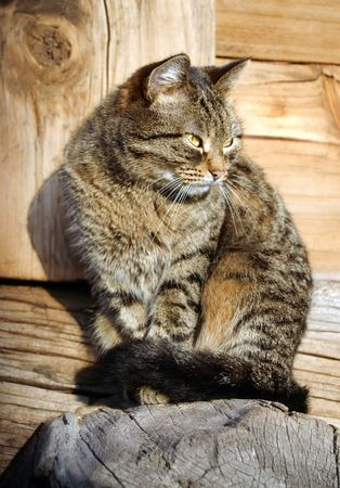Nice cat in the village photo