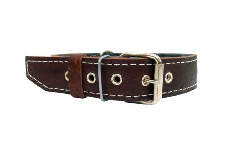 leather animal collar isolated on white Stock Photo - 6786463