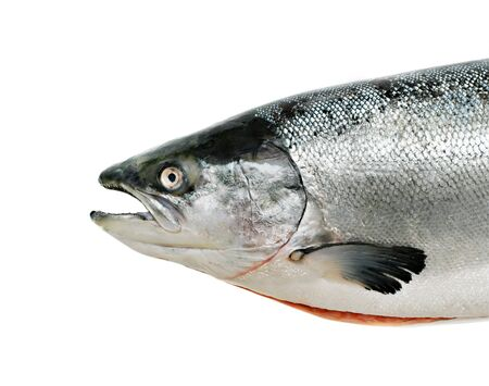 Salmon fish close up isolated on white Stock Photo