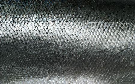 escamas de peces: Salm�n pescado escalas grunge textura espalda terreno  Foto de archivo