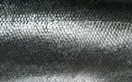 freshwater fish: Salmon fish scales grunge texture back ground