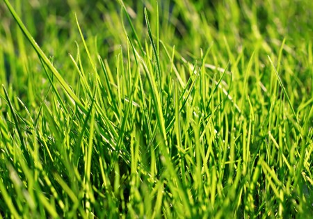 Green weed in the par as a background Stock Photo - 7163350