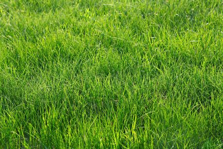 Green grass in the park as a background photo