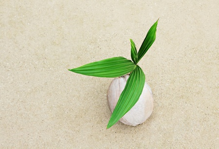 Coconut with green sprout on the beach Stock Photo - 10085628