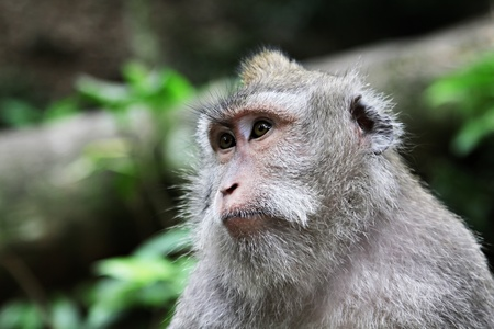 Cute monkey sitting in the jungle and looking away Stock Photo - 10085740