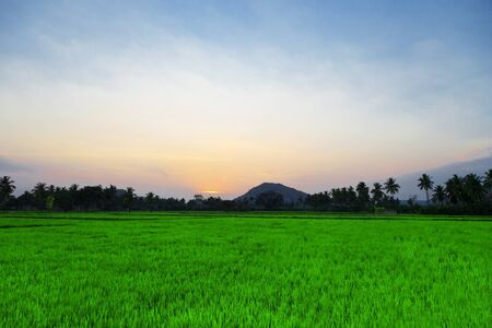 Sunset in the field, India photo