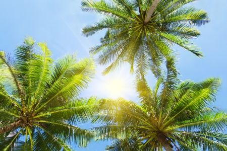 Three palms on the blue sky background photo