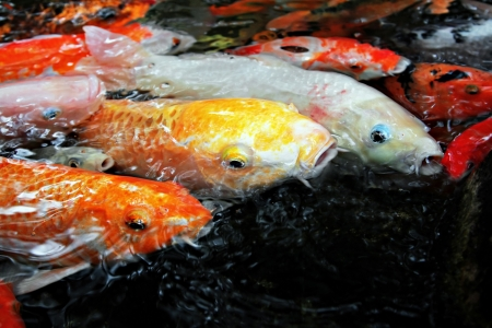 Tropical fishes in the water photo