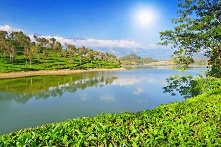 munnar: Tea plantation in Munnar, India Stock Photo