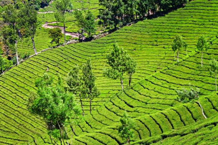 highlands region: Tea plantation in Munnar, India Stock Photo
