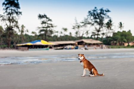 Homeless dog sitting on the beach, Goa Stock Photo - 22100933