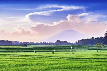 Rice field and volcano on sunrise, Bali Stock Photo - 22100973