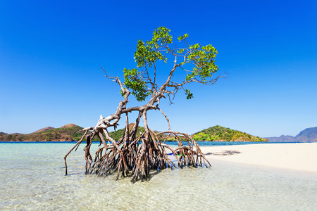 Lonely mangrove tree on the beauty beach