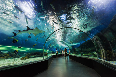 MANILA, PHILIPPINES - MARCH 18: Underwater tunnel on March, 18, 2013, Manila, Philippines. In terms of floor space, oceanarium is larger than oceanarium in Singapore, features a 25-metre  tunnel