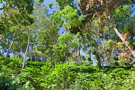 munnar: Deep tropical forest, Munnar, India