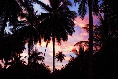 Palms on the beauty sunset sky background Stock Photo