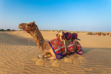 thar: Camels in Thar desert, Jaisalmer city in Rajasthan state of India
